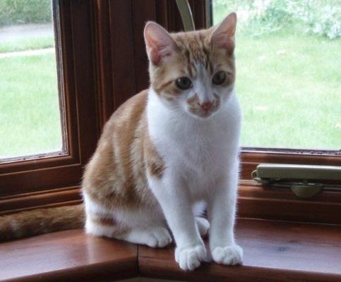 Кот ушел гулять и вернулся через 10 лет