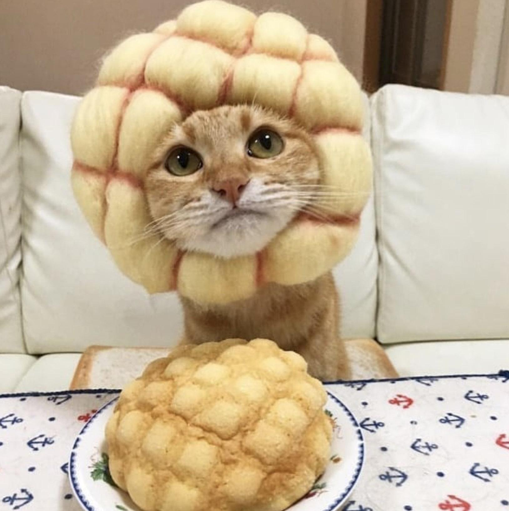 кот в шапочке ананасика