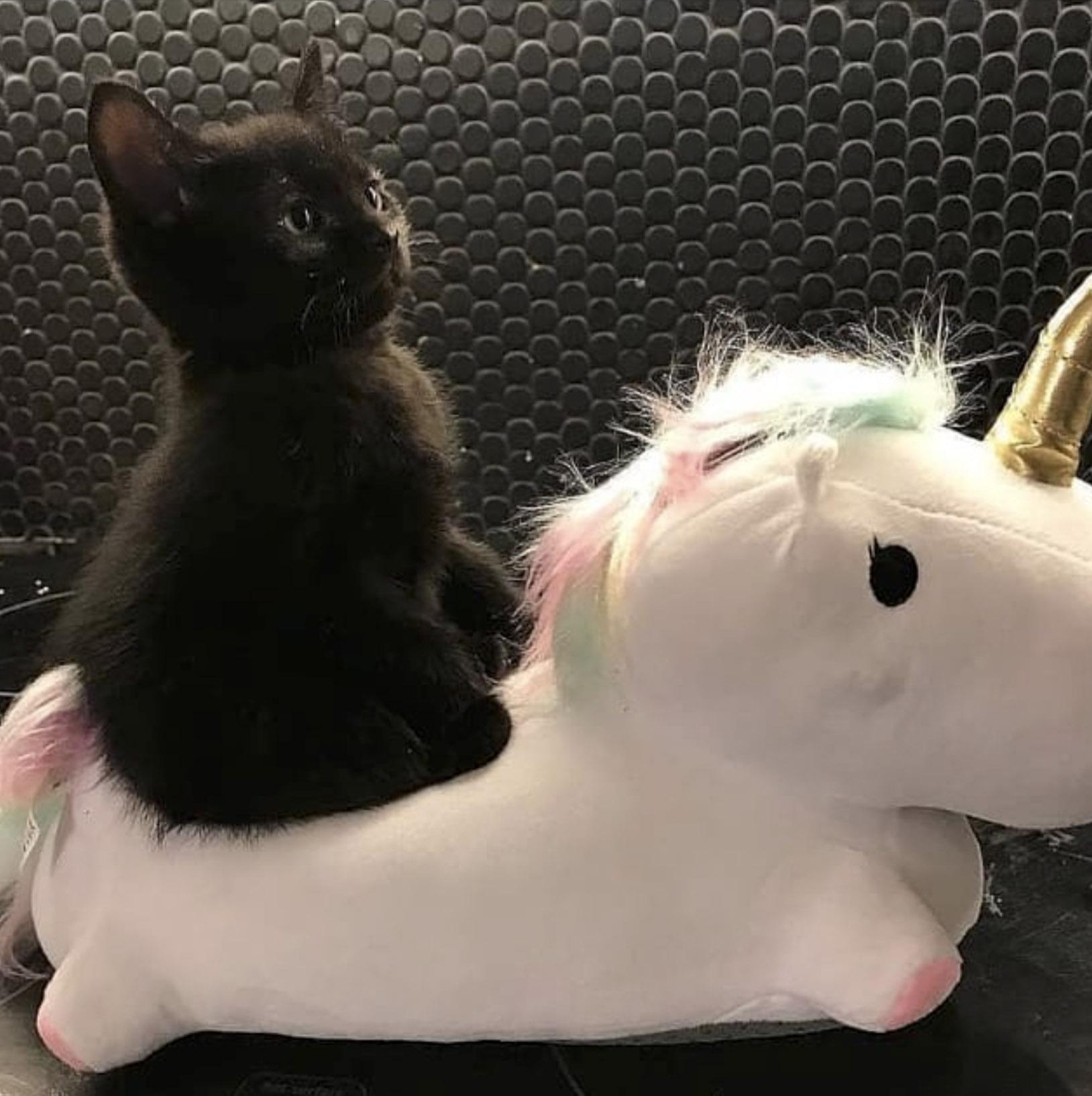 плюшевый котенок на плюшевом коне