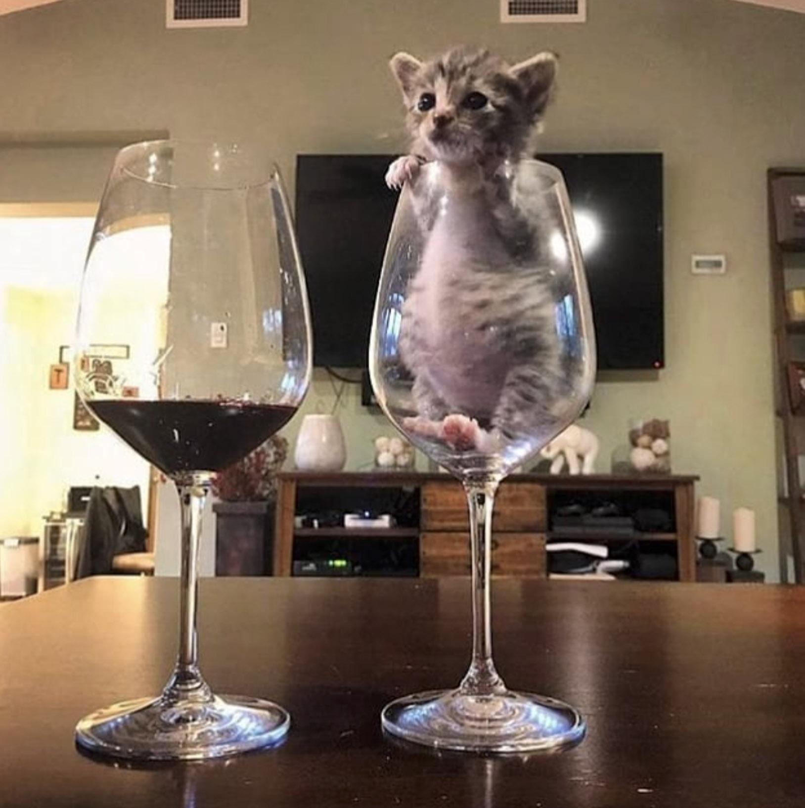 бокал с котенком
