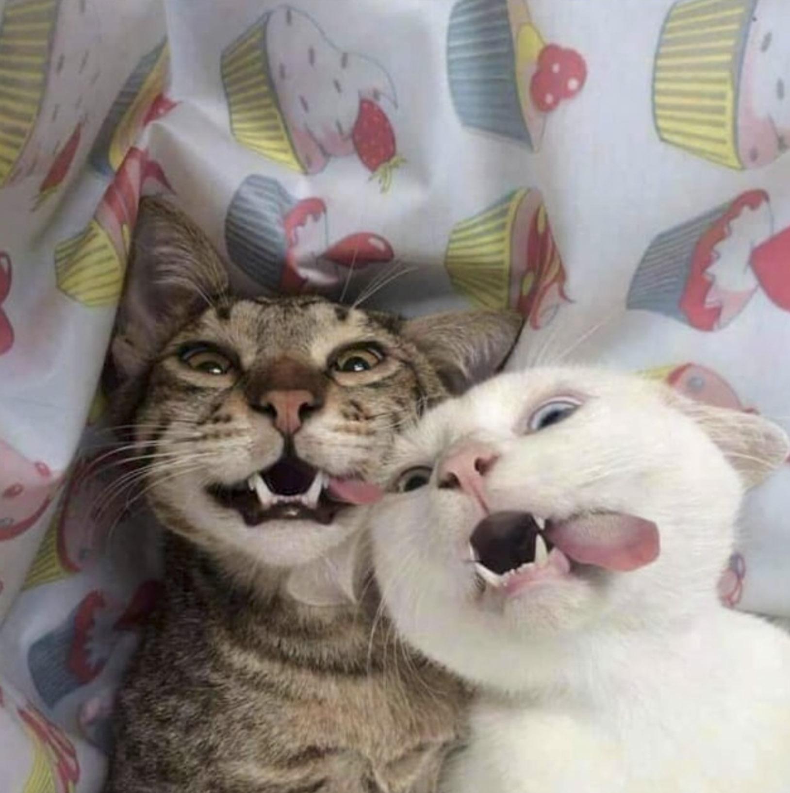 котики с высунытими язычками