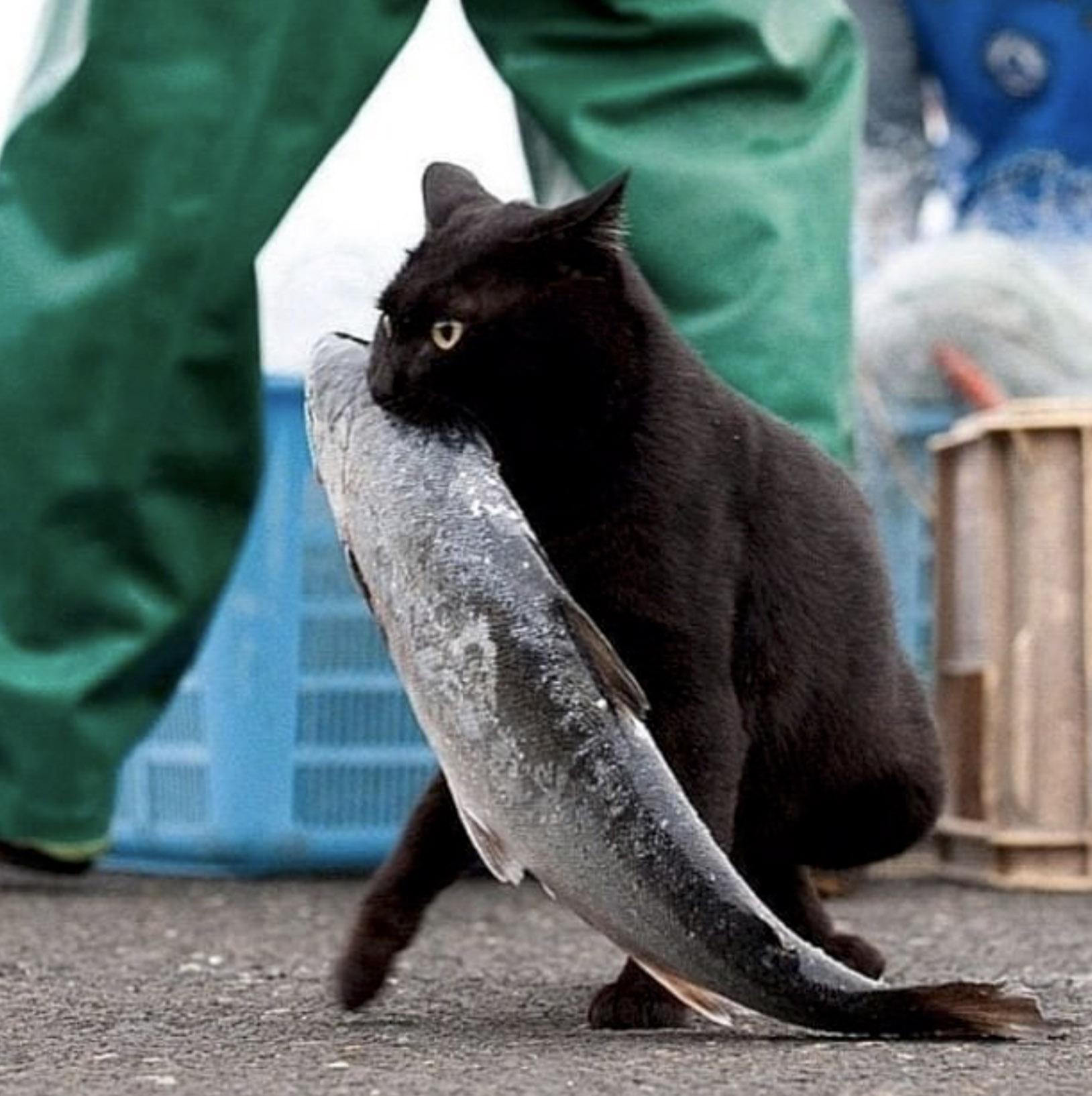 кот украл рыбку