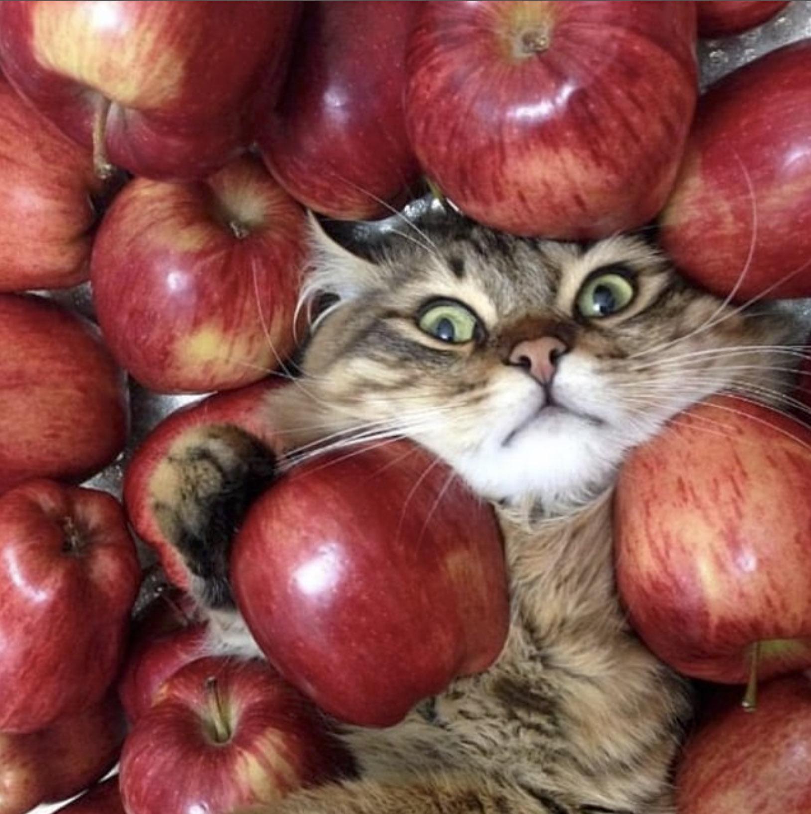 кота усыпали яблоками