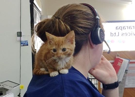 Виддл страдает кошачьей карликовостью