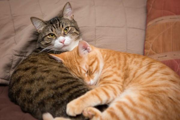 Любовь кота и кошки