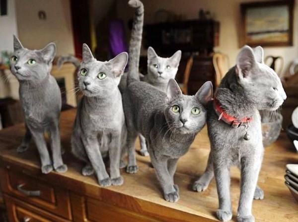 Толпа котиков