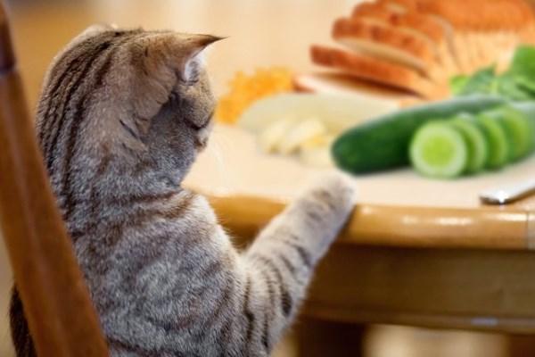 Кот ворует огурец