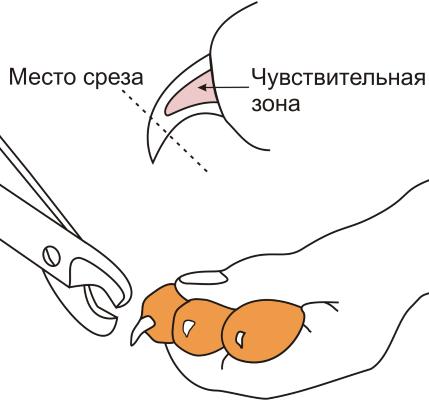 Как правильно стричь когти