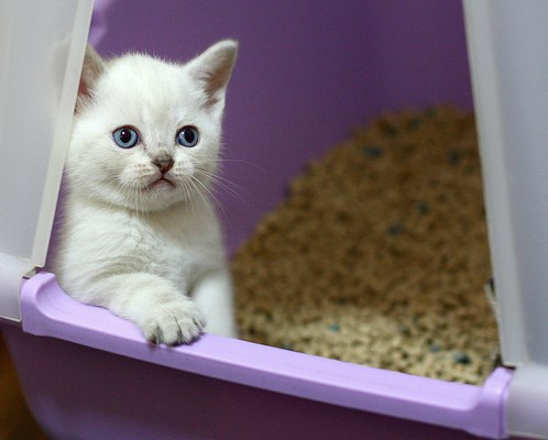 Котенок в закрытом лотке