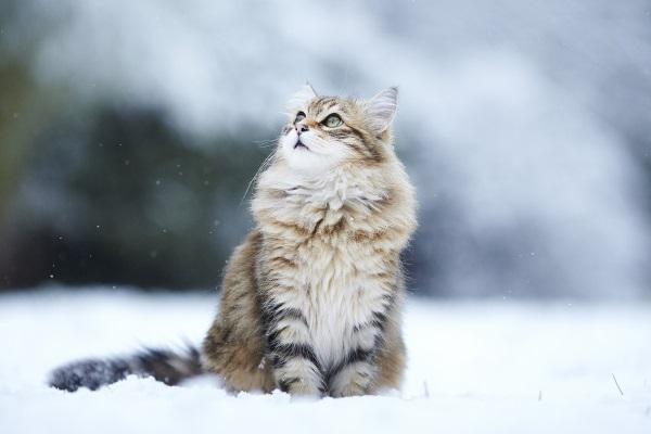 Кот смотрит на снег