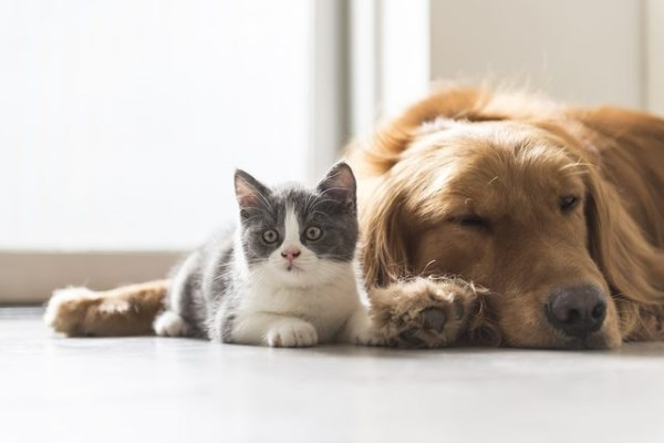 Как подружить котенка с собакой