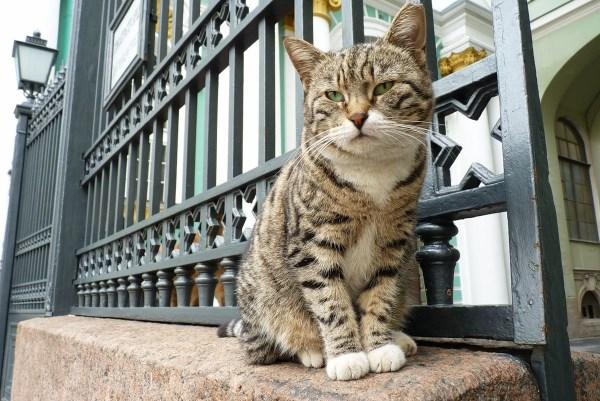 Кот сидит у Зимнего дворца