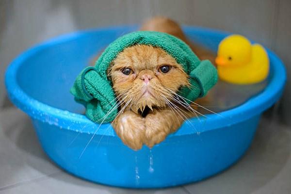 Кот в шапочке и с уточкой