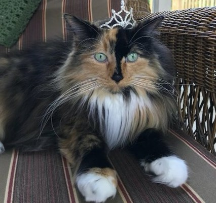 Кошка стала мэром