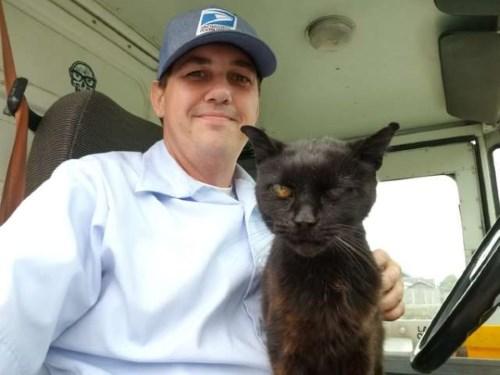 Кошка обнимается с почтальоном