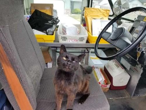 Кошка любит нюхать посылки