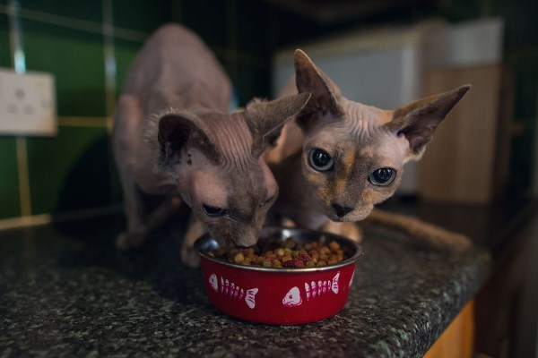 Коты едят