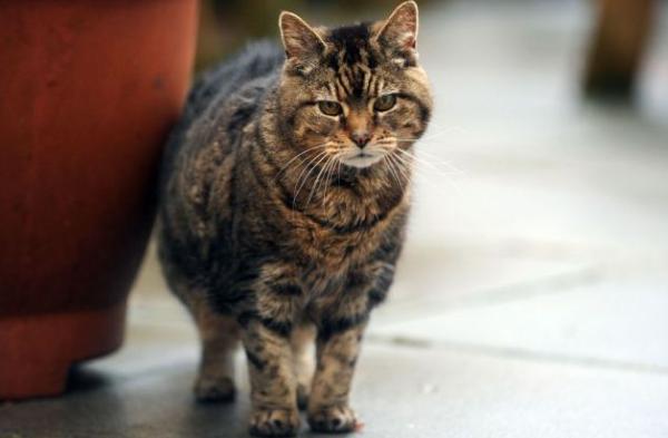 Кошка Люси прожила 38 лет