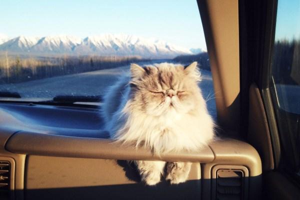 Путешествие с котом на машине