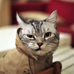 Кот обозреватель