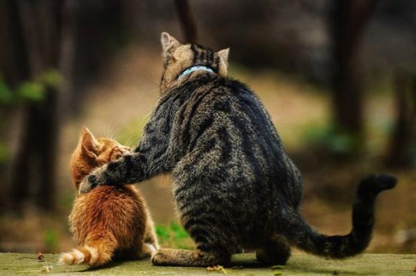 Как подружить котенка с котом