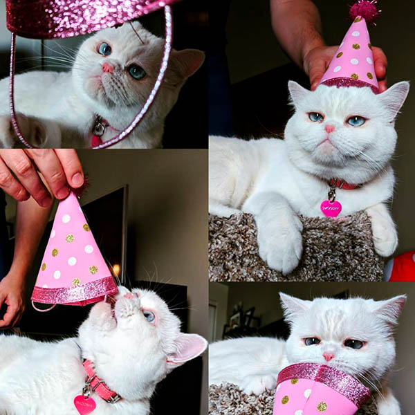 День рождения у кота