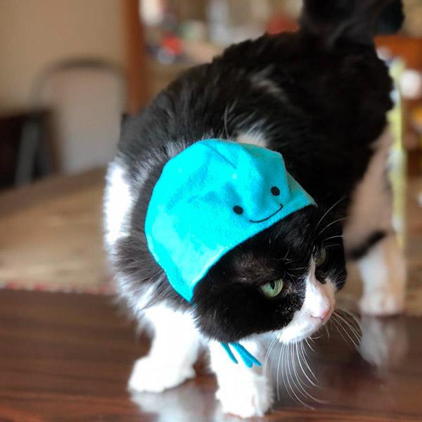 Кот в синей шапочке