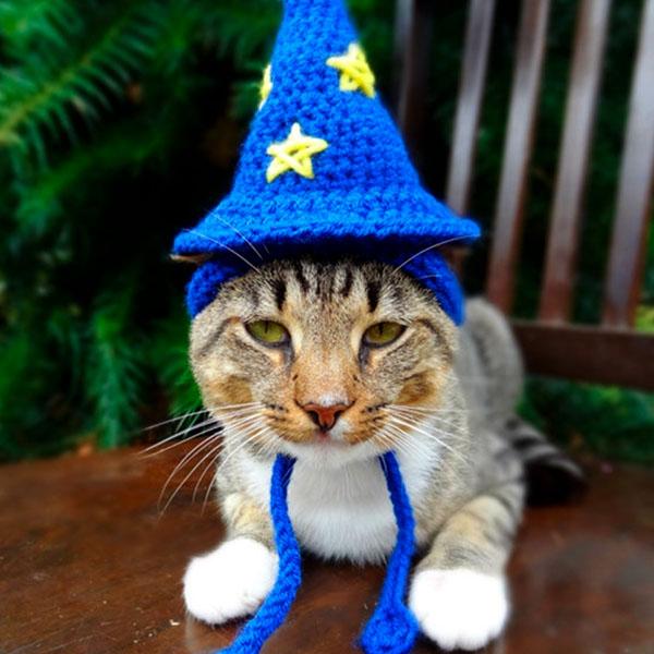 Кот волшебник