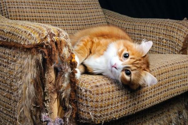 Котёнок точит когти об кресло