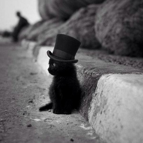 Кот джентельмен
