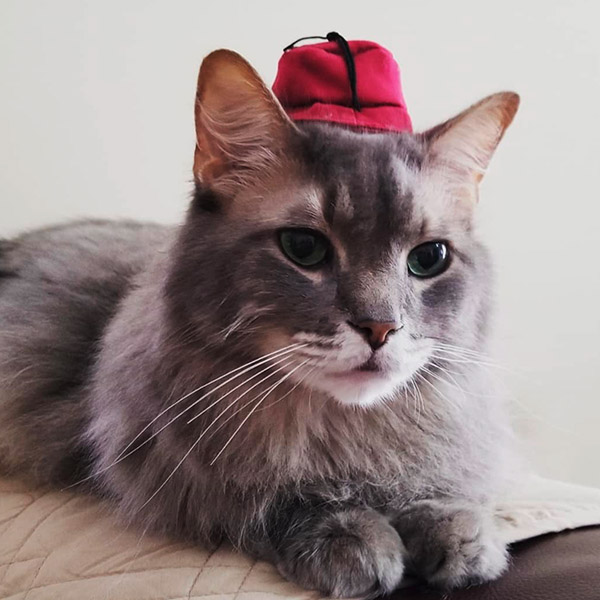 Кот в еврейской шляпке