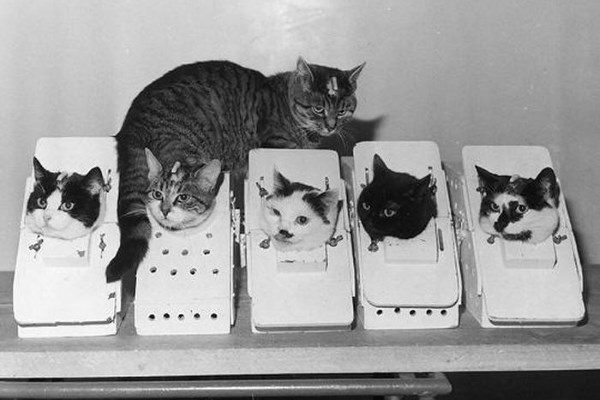 Коты в скафандрах