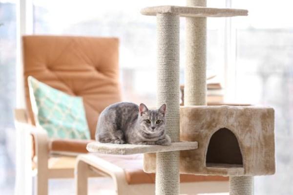 Игровой комплекс для котёнка