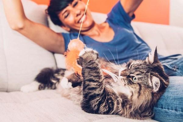 Кот играет с веревочкой