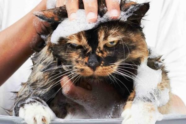 Как купать кошку