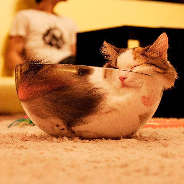 кот жидкость в миске