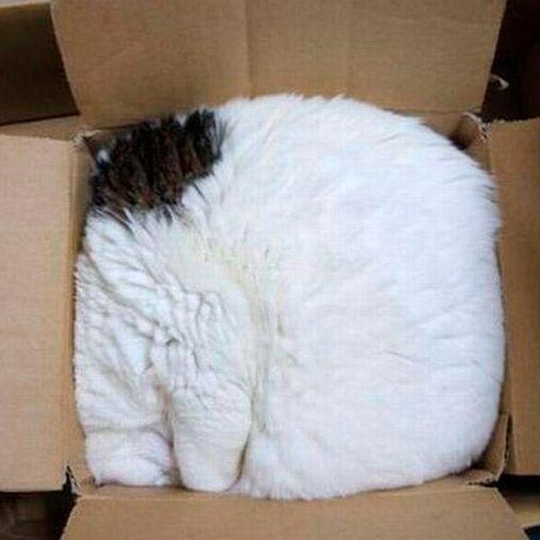 жидкий кот в коробке