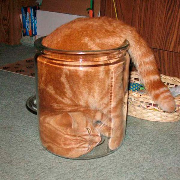 кот жидкость в банке