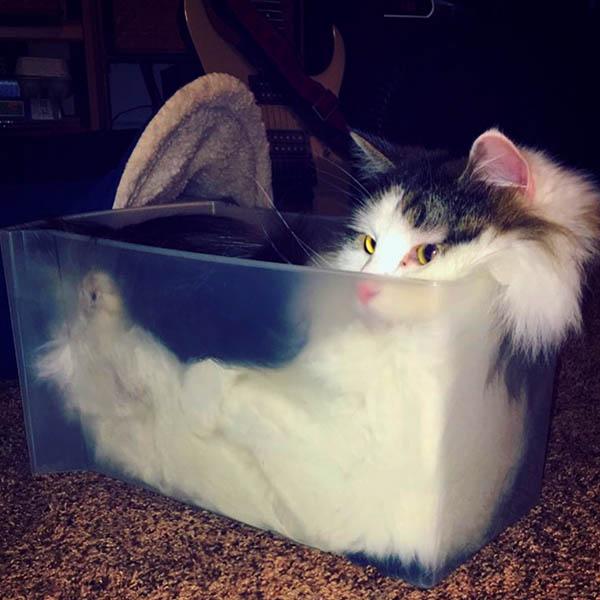 хлебный кот
