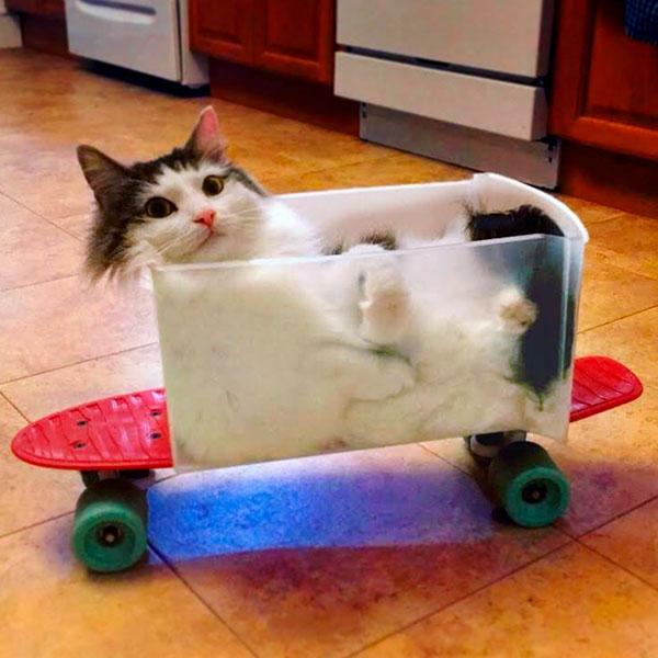 жидкий кот в форме для хлеба