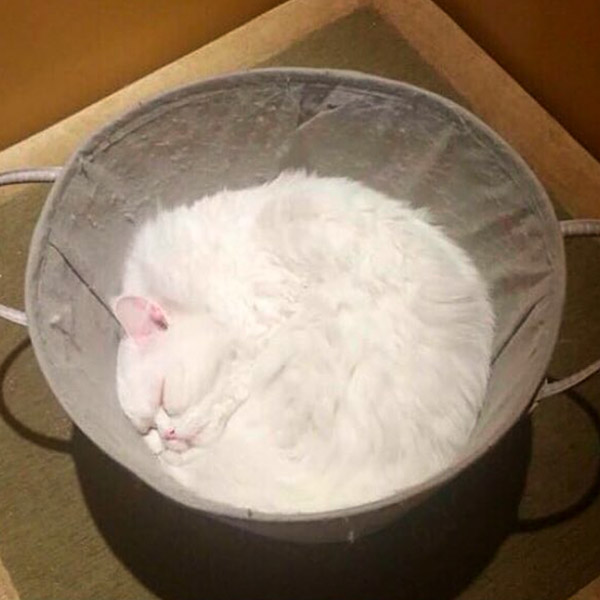 кот жидкость в корзинке