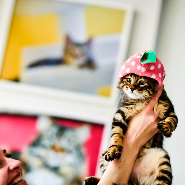 Котик в шапочке с клубничкой