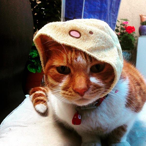 Милый кот в шапочке