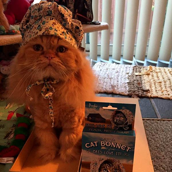 Кот в паварском колпаке