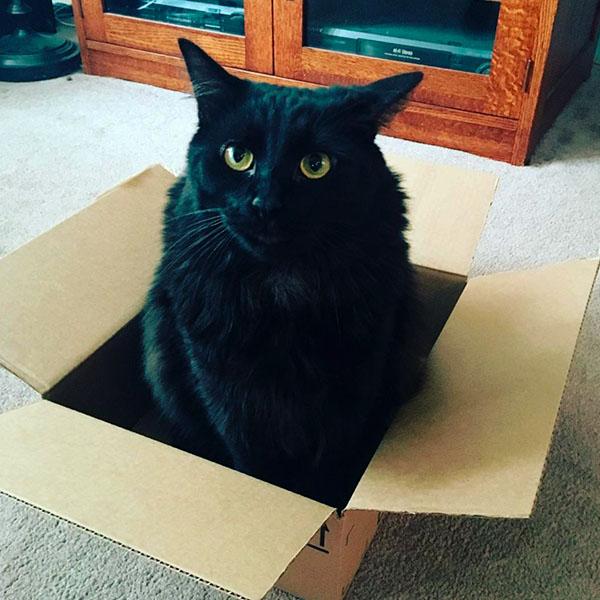 Черный кот в коробке