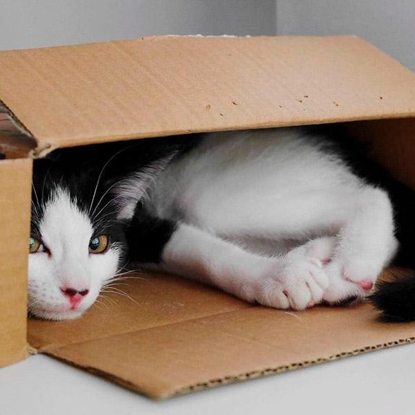 Кот красиво лежит в коробке