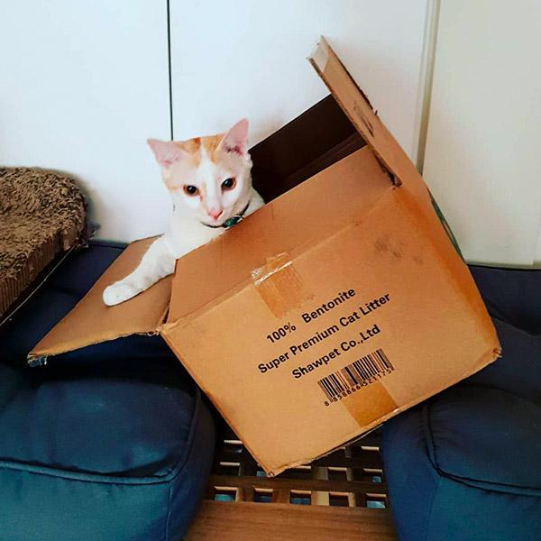 Бело-рыжий кот в коробке