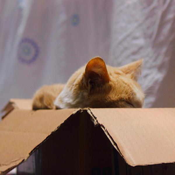 Котик спит в коробке