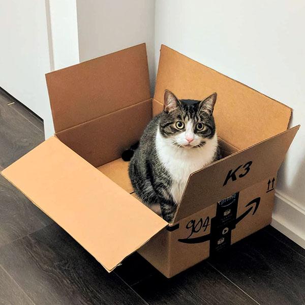 Удивленный в коробке