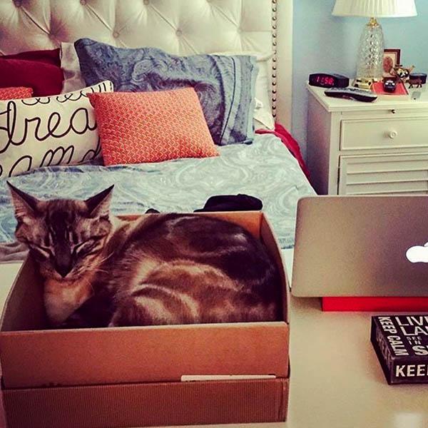 Котик уютно лежит в коробке